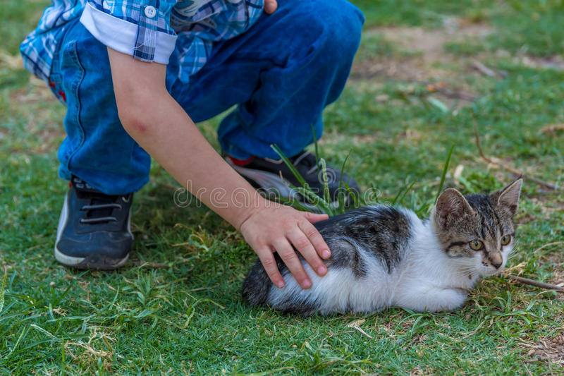 Cat and boy. A little boy loving a cat in outdoor stock images