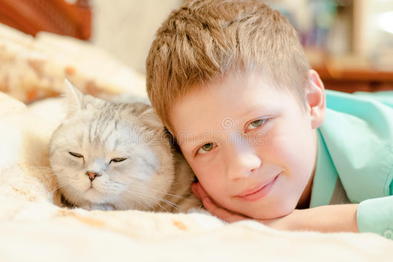 Cat breed British Shorthair with a boy. Cat breed British Shorthair and a boy lying on the bed and dozing royalty free stock photo
