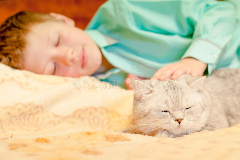 Cat breed British Shorthair with a boy. Cat breed British Shorthair and a boy lying on the bed and dozing royalty free stock photos