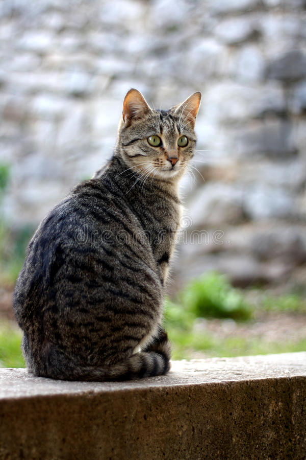Cat. Brown tabby cat sitting in the garden. Selective focus royalty free stock images