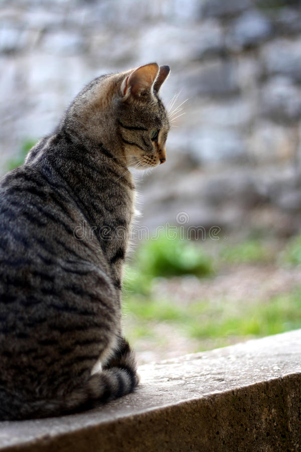 Cat. Brown tabby cat sitting in the garden. Selective focus stock images