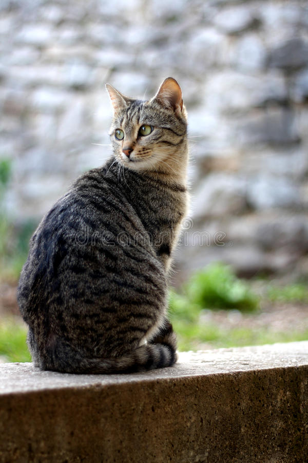 Cat. Brown tabby cat sitting in the garden. Selective focus stock photography