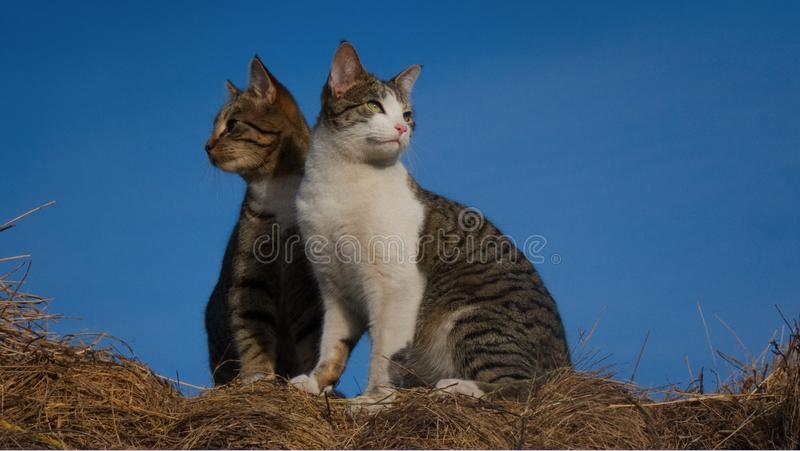 Cat buddies looking out at the world royalty free stock photography