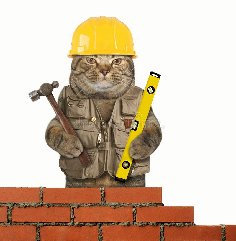 Free Cat Builder 4 Royalty Free Stock Photography - 123875887