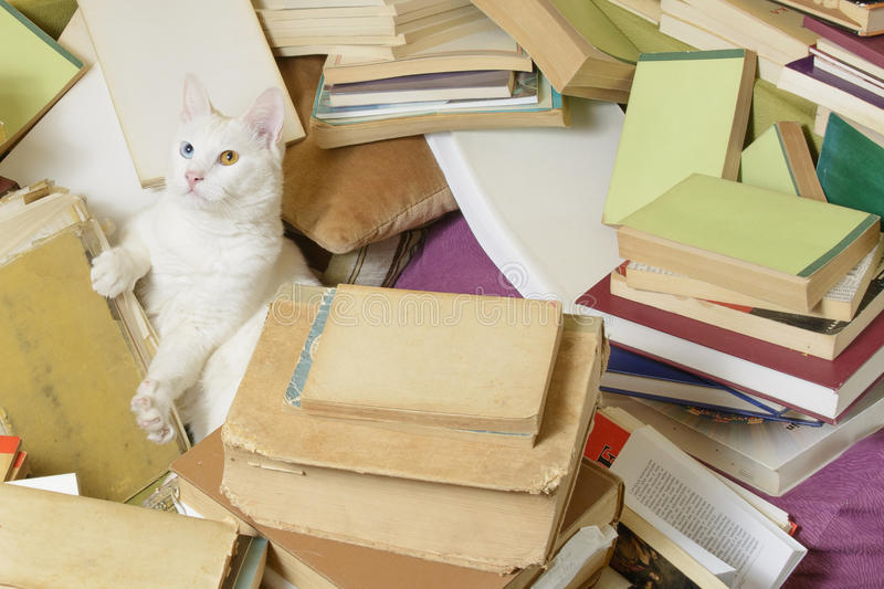 Cat in a bunch of books stretching out its paw. Beautiful white cat lying in a bunch of books, stretching out its paw stock photos