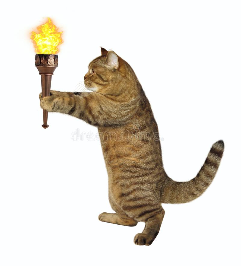 Cat with burning torch royalty free stock image