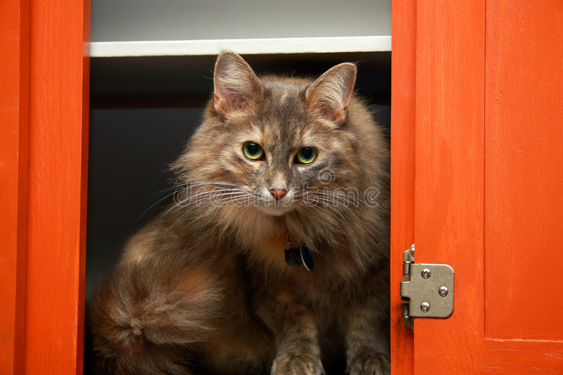 Cat in the cabinet stock images