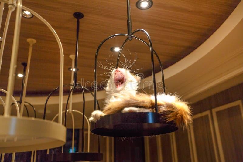Cat Cafe Shibuya immagine stock