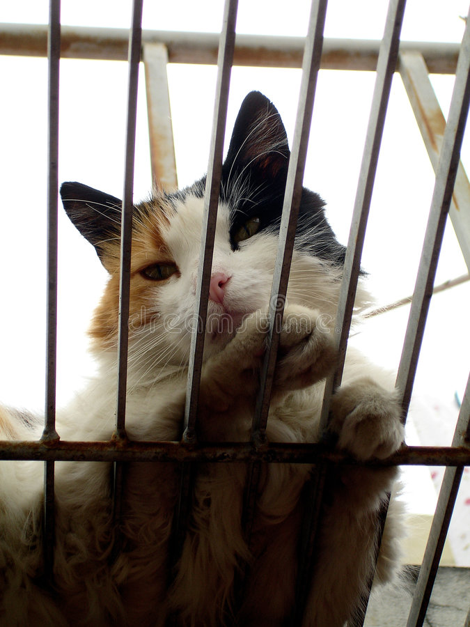 Download Cat in a Cage stock photo. Image of gata, animal, free - 2368470