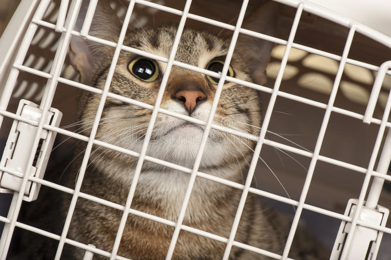Download Cat in a cage stock photo. Image of animal, euthanasia - 28349574