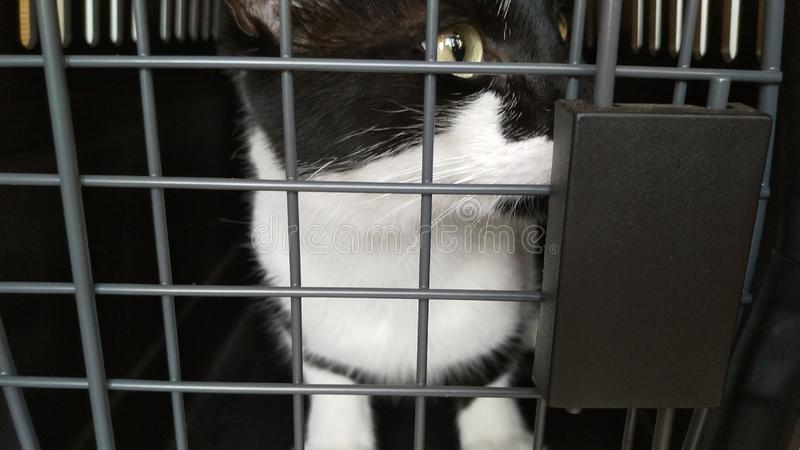 Cat in a Cage at the vet royalty free stock images