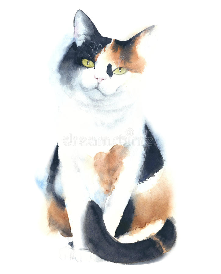 Free Cat Calico Portrait Watercolor Painting Illustration Isolated On White Background Royalty Free Stock Image - 82699126