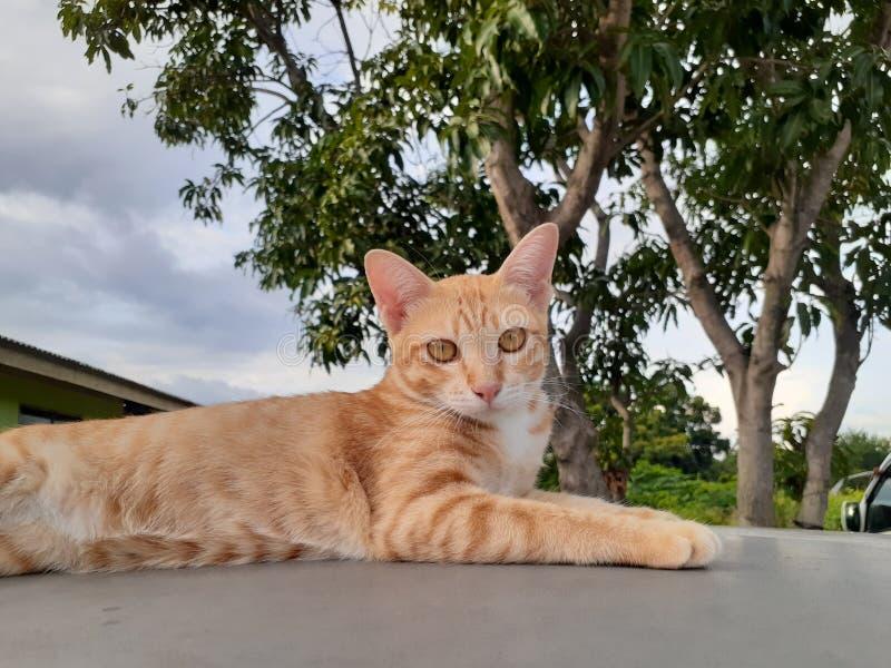 Cat Candid Shot imagens de stock