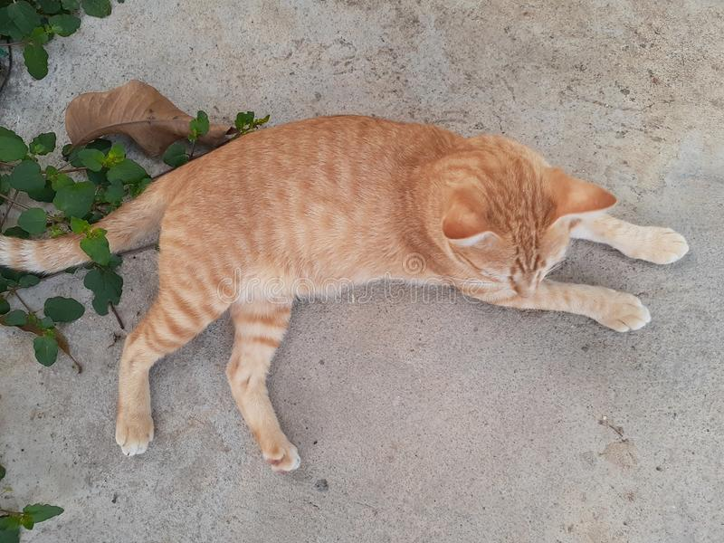 Cat Candid Shot from Top imagem de stock royalty free