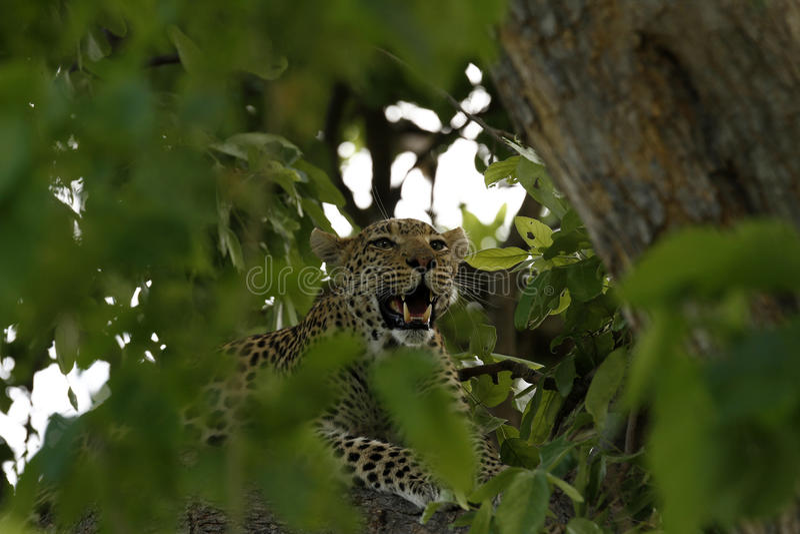 Cat Canopy grande imagens de stock royalty free