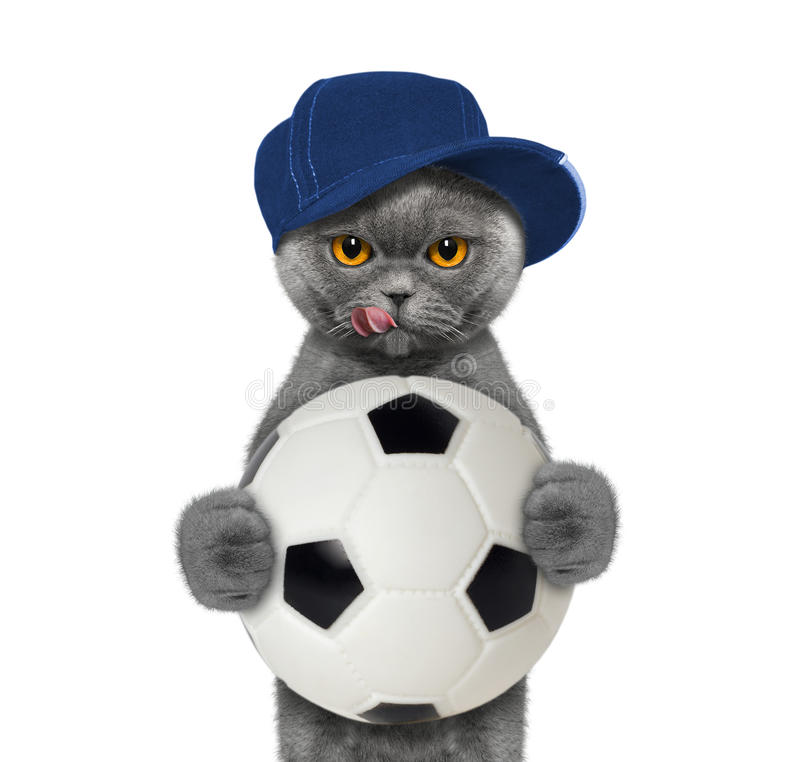 Cat in cap with a ball. Isolated on white background stock images