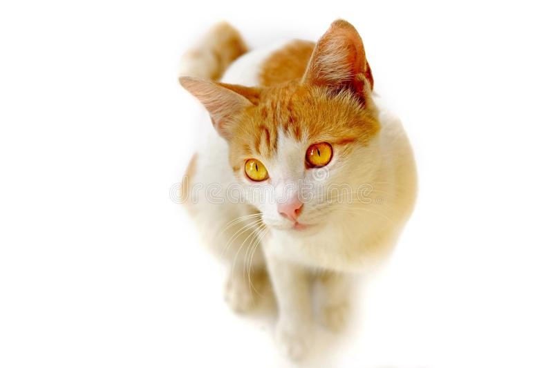 Cat captured from bottom with cute position royalty free stock photography