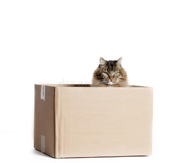 Cat in Cardboard Box. A cat sitting in brown cardboard box peering out over top edge, white background stock photography