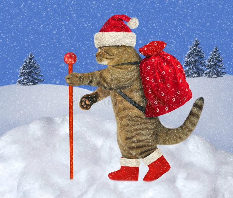 Cat carries Christmas gifts 2 royalty free stock photo