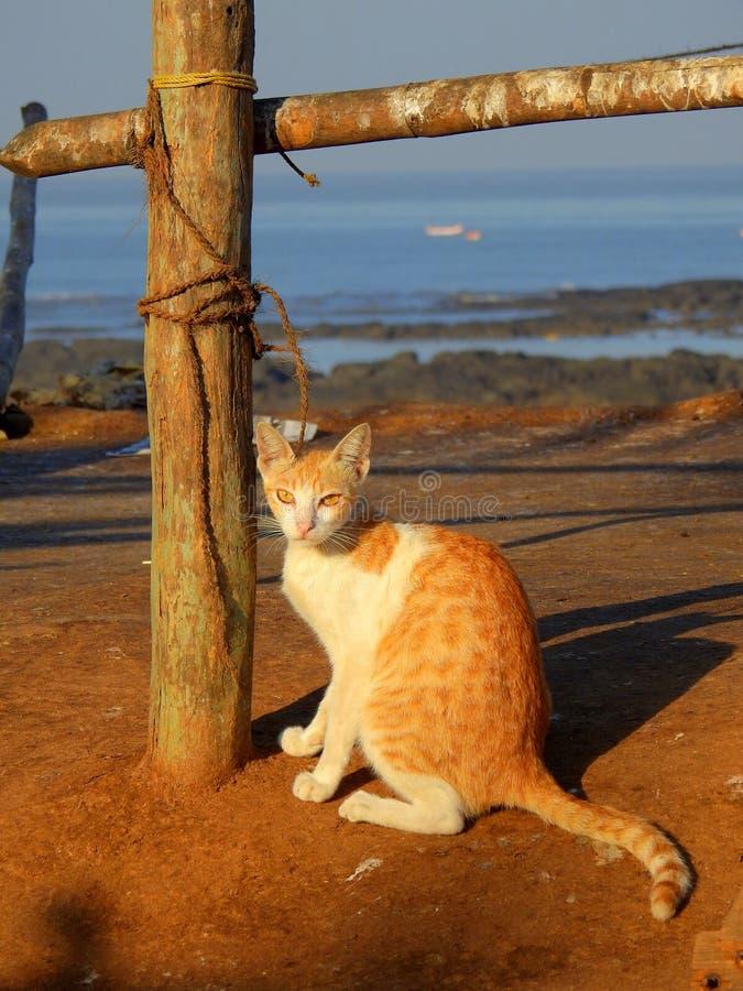 Cat In Carter Beach Mumbai Stock Image. Image Of Union