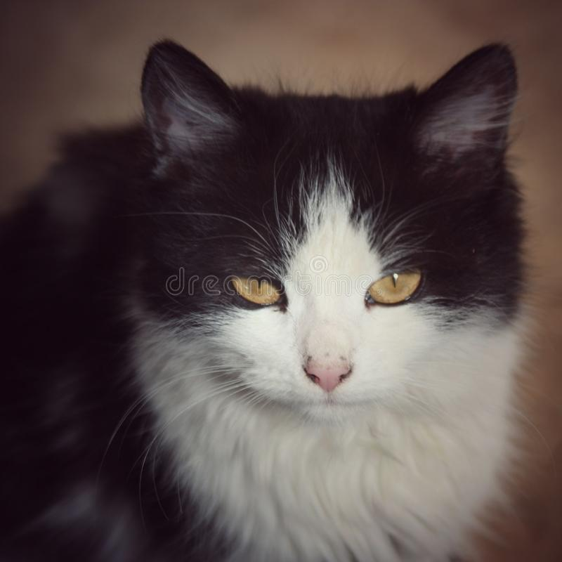 Cat. Cute look at the camera soft  cute look at the camera soft focus royalty free stock image