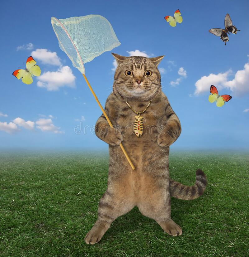 Free Cat Catches Butterflies In Meadow Stock Photography - 214031942