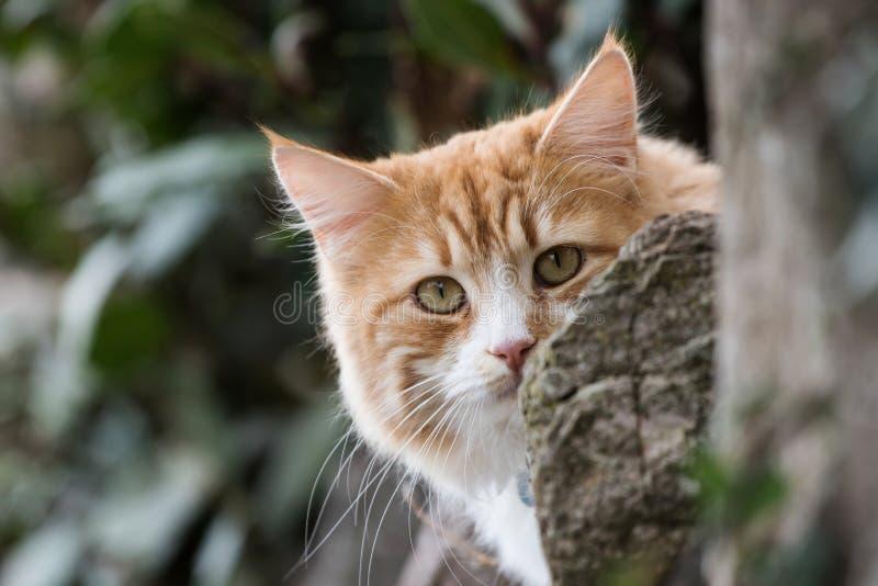 Cat, Cats, Kitty. Home Mammals - Cat, Cats, Kitty royalty free stock photography