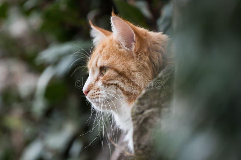 Cat, Cats, Kitty. Home Mammals - Cat, Cats, Kitty stock photos