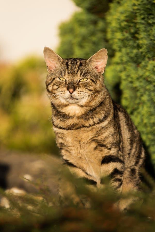 Cat, Cats, Kitty. Home Mammals - Cat, Cats, Kitty royalty free stock photos