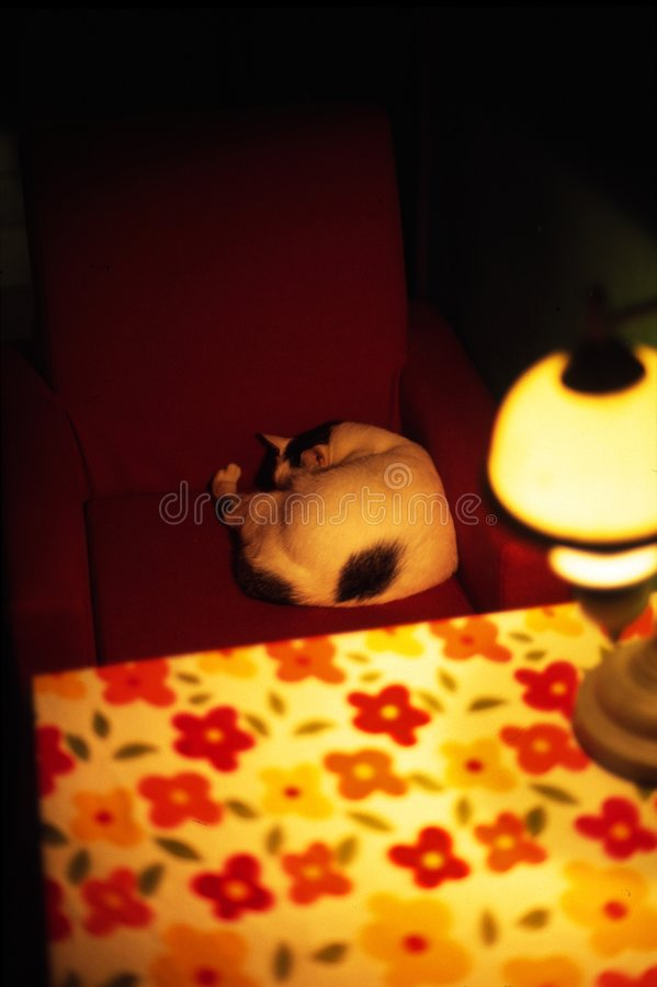 Cat in chair royalty free stock photo