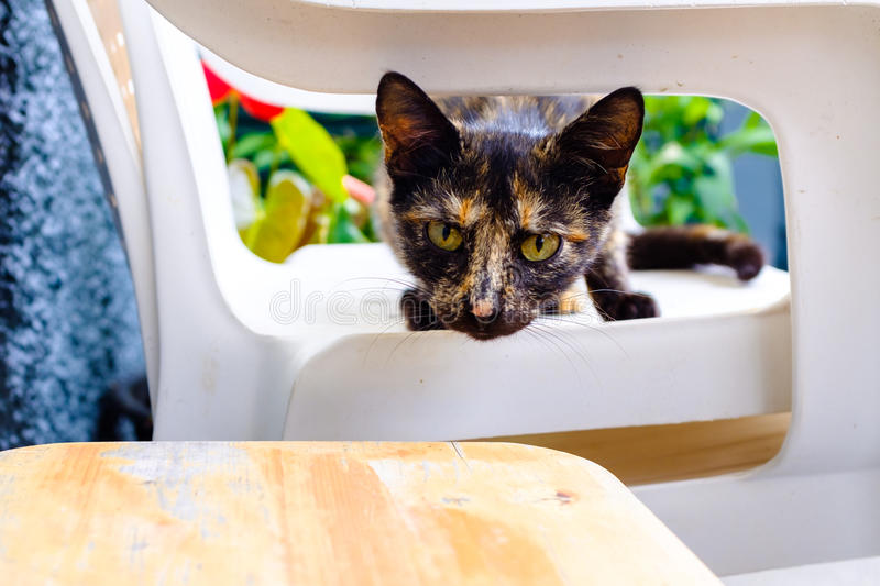 Cat on a chair royalty free stock photos
