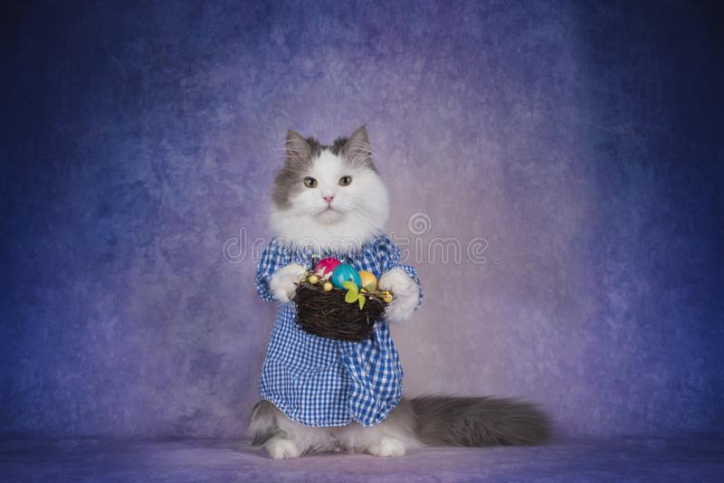Cat in checkered shirt celebrates Easter.  stock photo