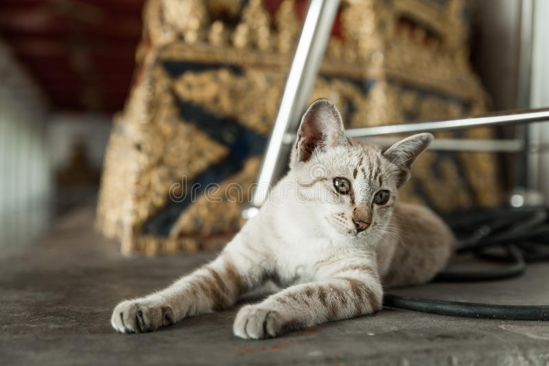 Cat Chilling em Wat Arun Temple fotografia de stock