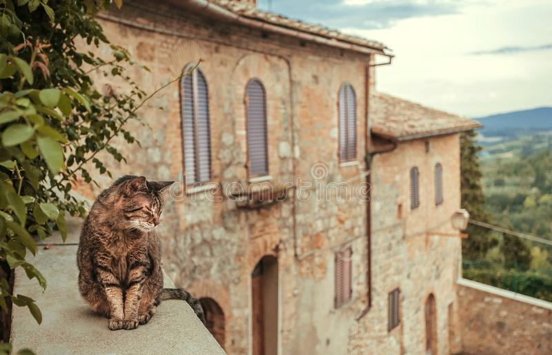 Cat chilling inside courtyard of rural house ot mansion at evening Tuscany. Green trees, hills of countryside of Italy. Cat chilling inside courtyard of rural stock photos