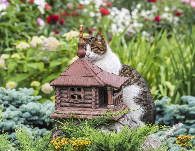 Cat chooses a new home royalty free stock photography