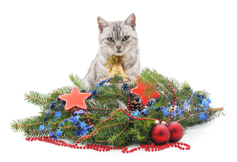Cat and Christmas. The cat with a bell around the Christmas tree stock photo