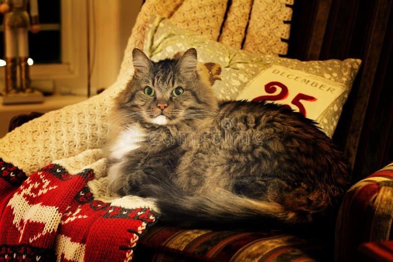 Cat on Christmas Blanket Warm Lighting royalty free stock image