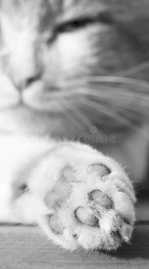 Download Cat claw stock image. Image of gray, moustaches, animal - 22981063
