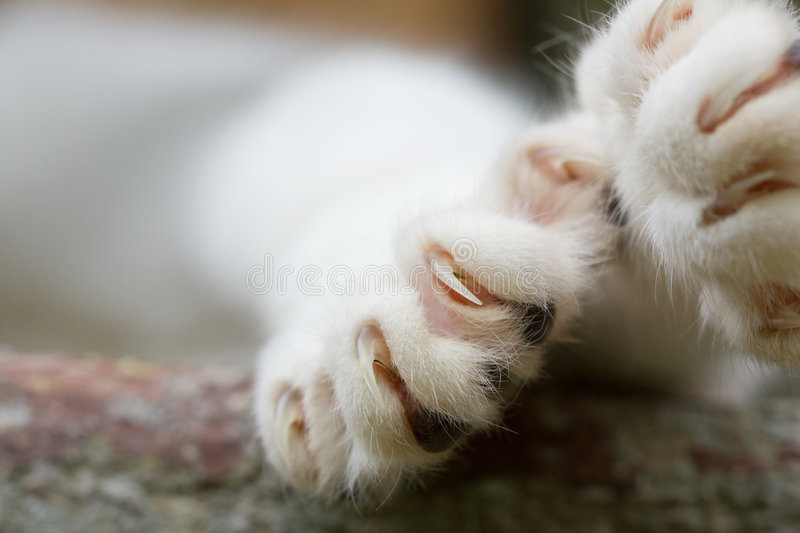 Cat Claws. Close-up of cat paw with claws out royalty free stock photos