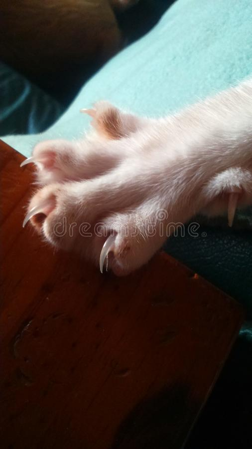 Cat claws. Cat foot with claws royalty free stock image