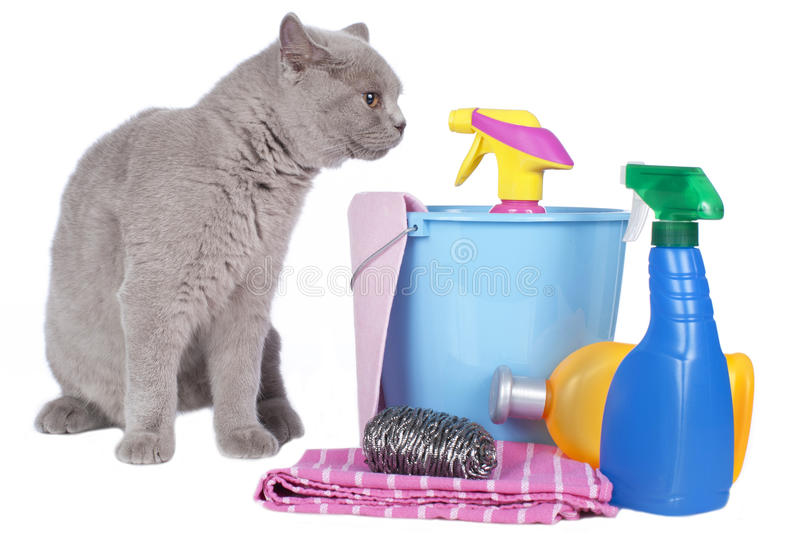 Cat with cleaning agents. Isolated on white stock image