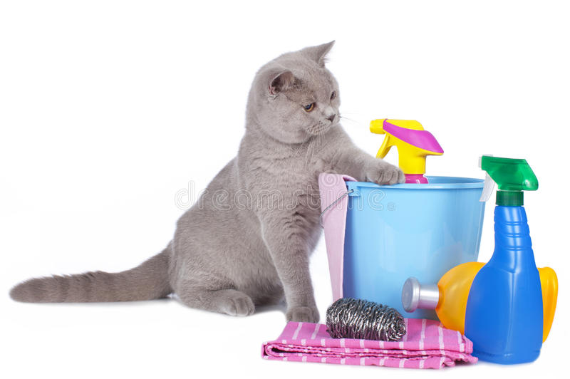 Cat with cleaning agents. Isolated on white stock photography