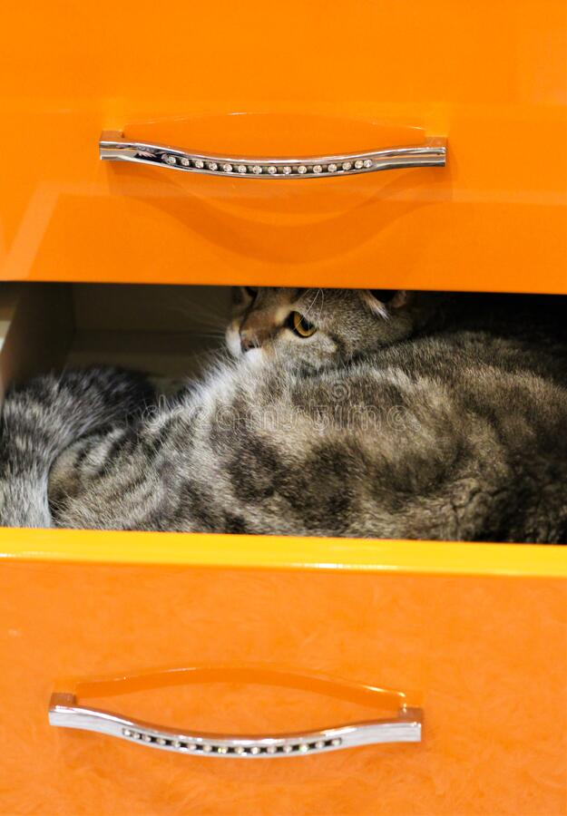 The cat climbed into a drawer.  royalty free stock photo