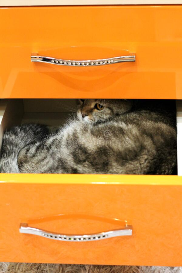 The cat climbed into a drawer.  stock images