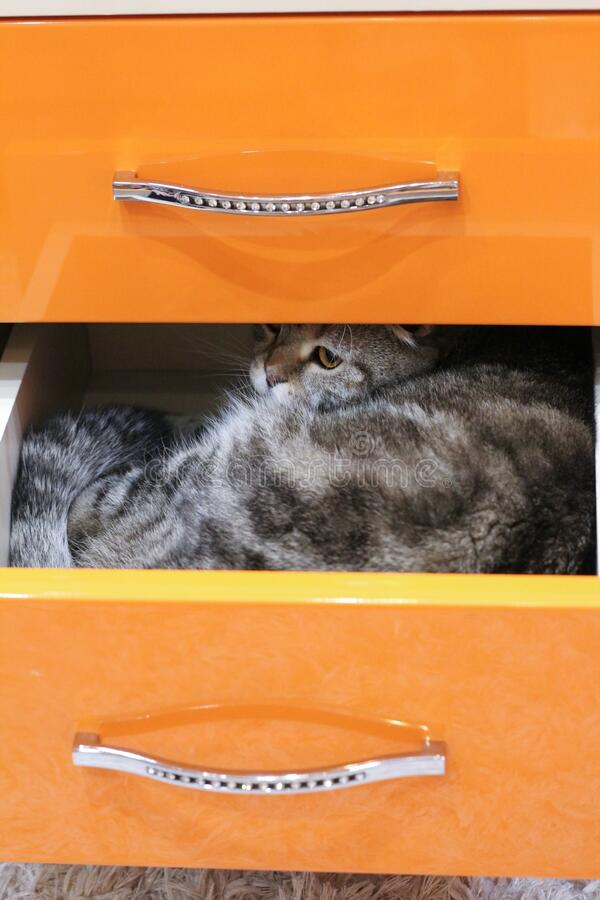 The cat climbed into a drawer.  royalty free stock image