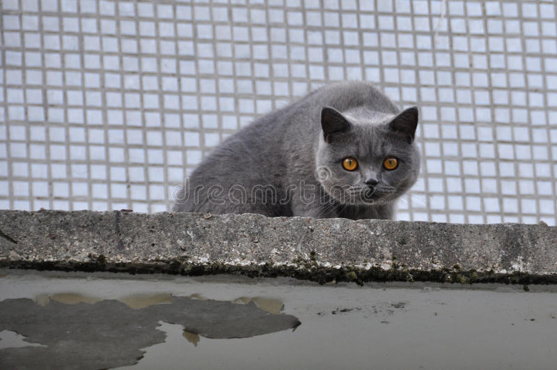 Cat climbed high on the roof. Of the house stock image