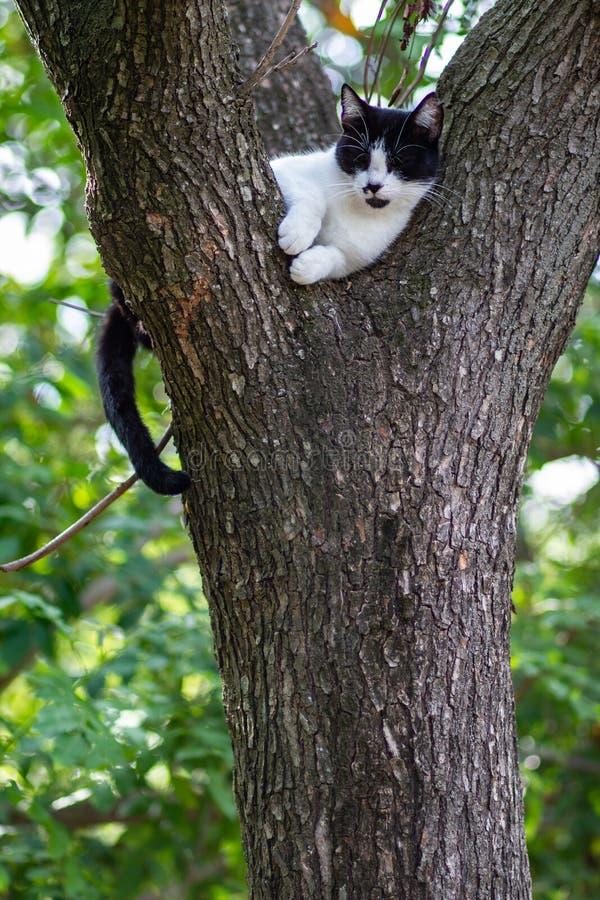 Cat climbed on a tree stock photo