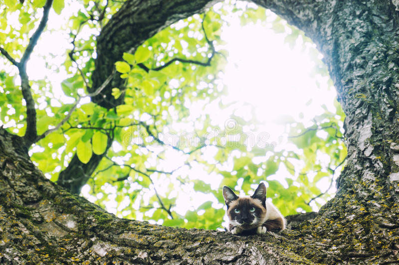 Cat climbed in a tree. Looking down royalty free stock image