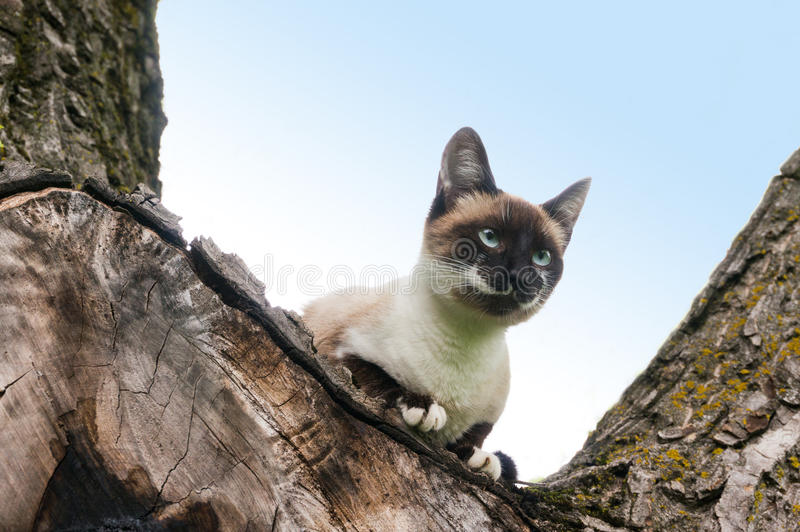 Cat climbed in tree. Looking focused stock photography