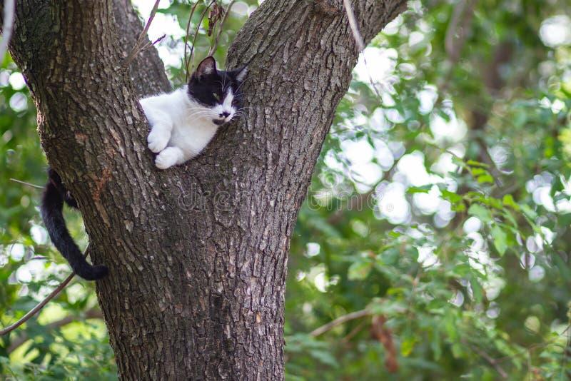 Cat climbed on a tree stock image